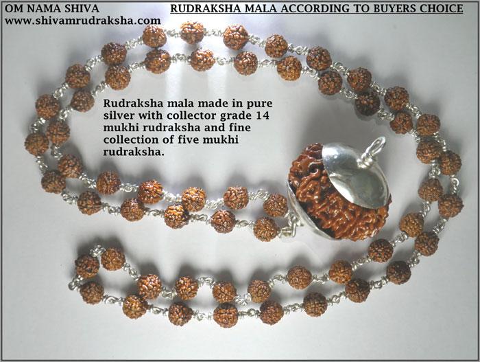 Rudraksha Mala Buyers Choice Shivam Rudraksha Rudraksha